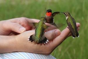 Hummingbirds Close Up