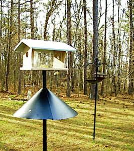 Bluebird Feeder in My Yard