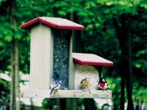 Double Hopper Bird Feeder