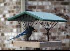 wild bird feeders