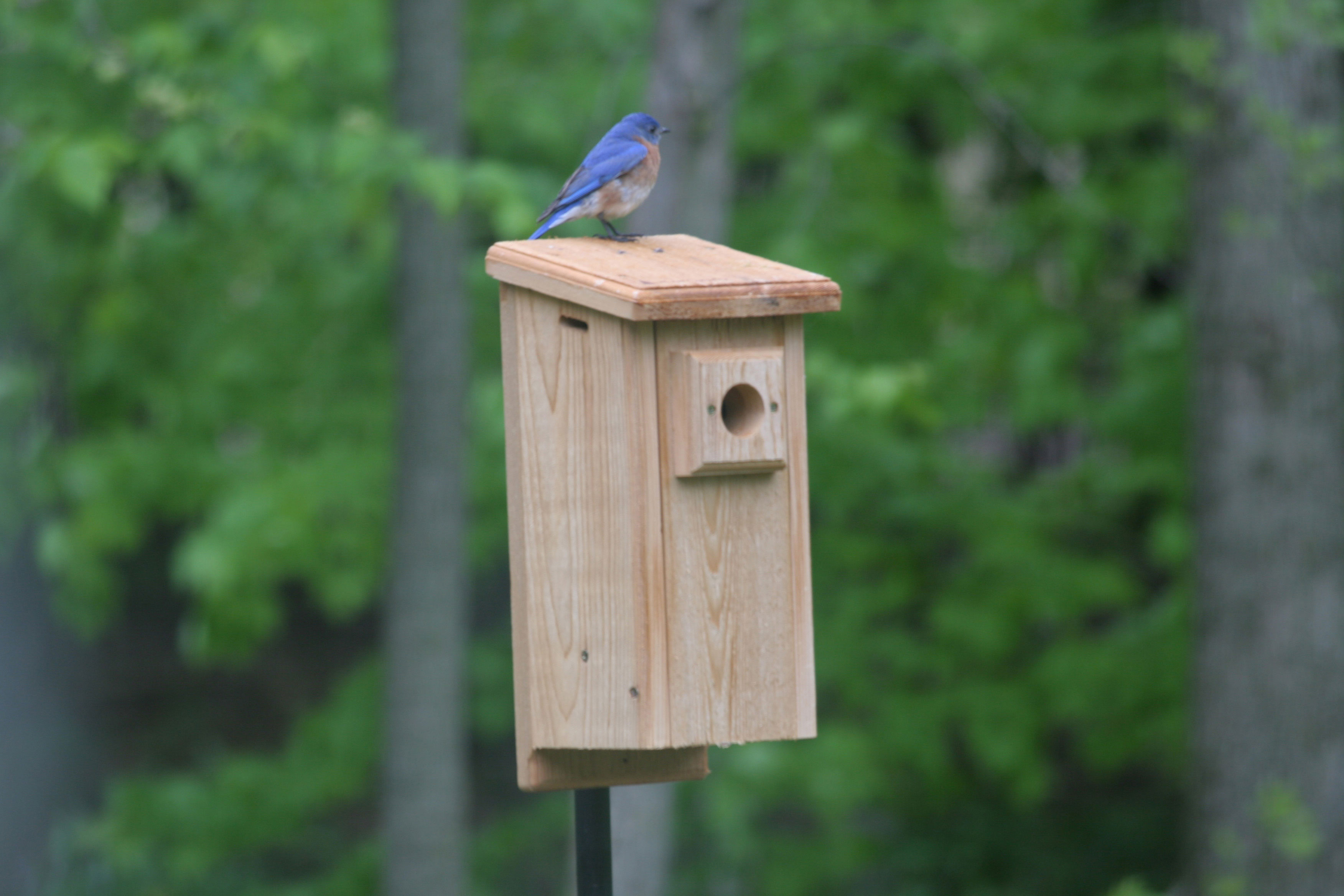 Bluebird House | www.woodworking.bofusfocus.com