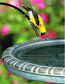 birdbath accessories like drippers entice more birds