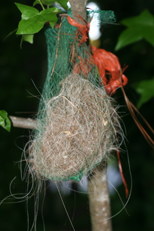 offer home-made nesting materials near birdhouses