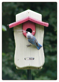Cedar BlueBird House with Viewing Window and Predator Guard