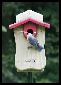 Cedar BlueBird House with Viewing Window and Predator Guard
