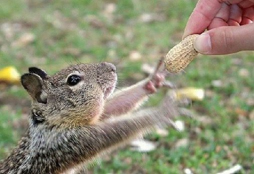 feeding peanuts to a friend because squirrel proof bird feeders are off limits!