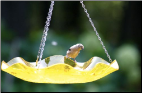 Fun Acrylic Hanging Bird Bath
