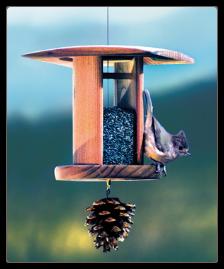 songbird lantern nyjer feeder