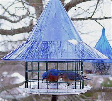 sky cafe mealworm feeder for bluebirds