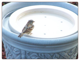 the birdbath raft turns any container into a bird magnet