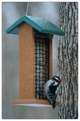 A Recycled Plastic Double Suet Feeder works great for feeding peanuts too