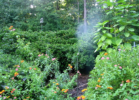 butterfly habitat includes native plants and a leaf mister