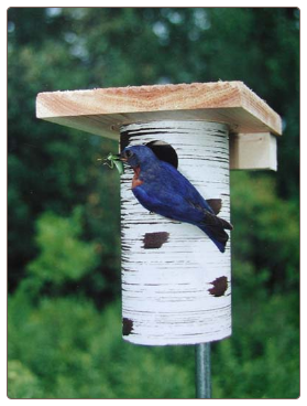 famous Gilbertson Bluebird Houses