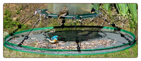 Seed Hoop is a large adjustable seed catcher that fits most bird feeders