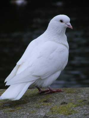 seed catchers and white doves?