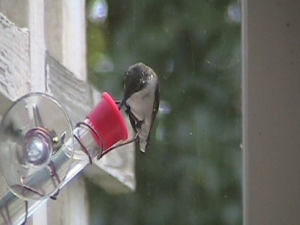 window hummingbird feeder doubles as a hand feeder for hummers