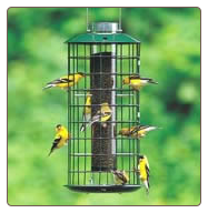 A Finch Nird Feeder attracts more than just Goldfinches
