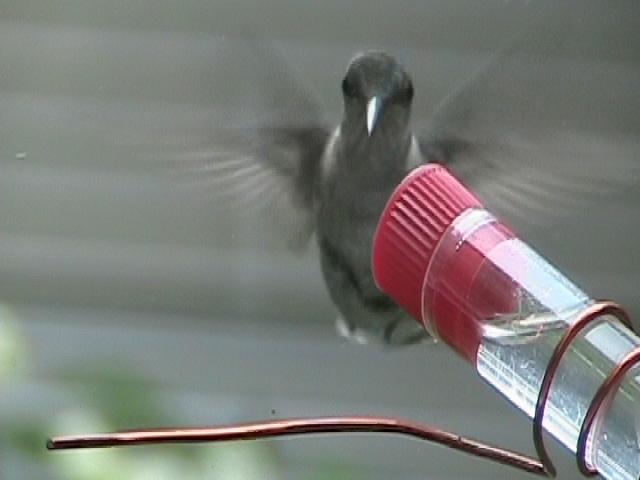 close up of window hummingbird feeder and hand-fed hummer