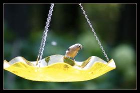 vibrant yellow acrylic hanging bird bath