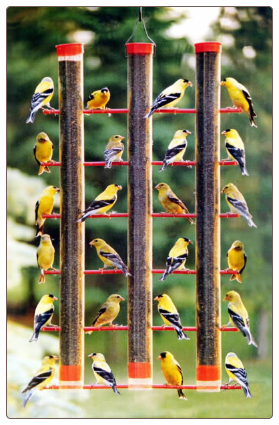 you'll find finch feeders packed this time of year