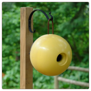 this Globe home is part of the mango tree wood birdhouses collection