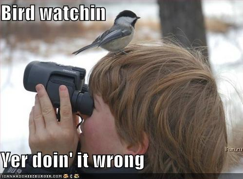 local backyard birding classes in Kennesaw GA