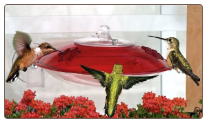 this window hummingbird feeder doubles as a seed feeder in winter months