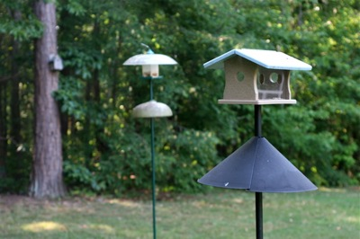 fly-in mealworm feeder sees lots of bluebird activity
