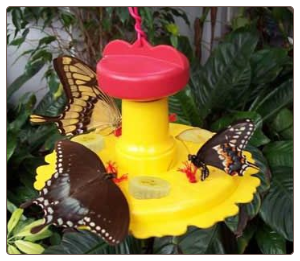 hang or pole-mount this cool butterfly feeder, includes nectar too