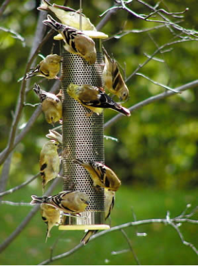 "stainless steel nyjer feeder bybirdschoice features ""all-over"" feeding"