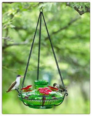 use an ant moat with your hummingbird feeder for a hassle-free experience