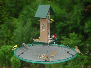 Promote healthier bird populations in your yard with seed catchers