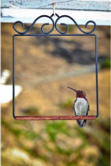 Place their swing near your window hummingbird feeder