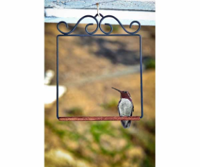 Pop's Hummingbird Swing is a fantastic accessory to hang near your window hummingbird feeder