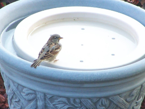 Turn decorative pots and containers into Bird Baths with the Birdbath Raft