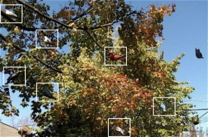 An old oak tree hosts lots decorative bird houses providing roosting and nesting sites for city birds