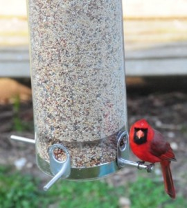 A Classic Squirrel Proof Tube Bird Feeder attracts all kinds of birds