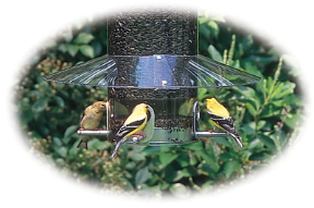 A Tube Bird Feeder with fantastic options, this one features a weather guard too.