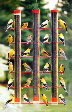 Even with soaring temperatures... finch feeders are mobbed