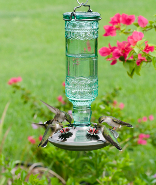 Feeding frenzies abound at hummingbird feeders as the big migration is in full swing!