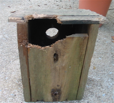 damage on old bluebird houses likely due to squirrels