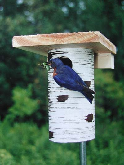 These blue bird houses are approved by The North American Bluebird Society