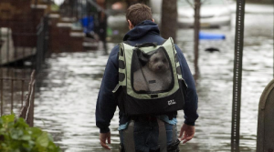 Two and Four-Legged Victims of Hurricane Sandy