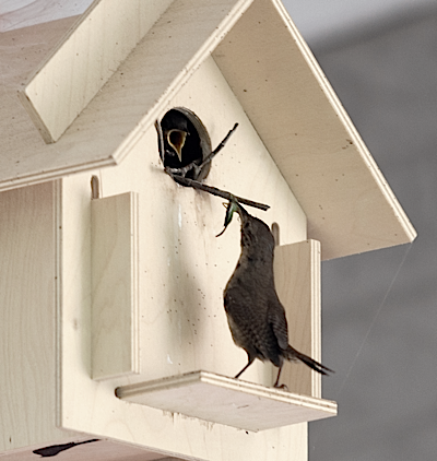 In traditional or mod styles, Box for Birds kits in action