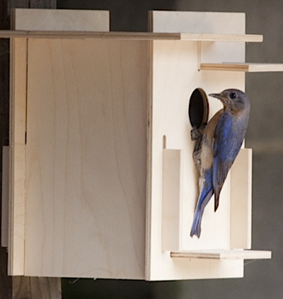 Start birdhouse kit projects now for the first scout's approval