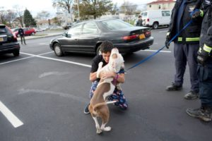 A happy reunion for some, but many animals still suffer effects of Hurricane Sandy
