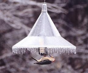Hanging squirrel baffle