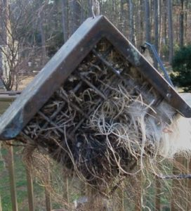 Offer nesting materials to encourage songbird residency in your edible birdhouse once the food's gone