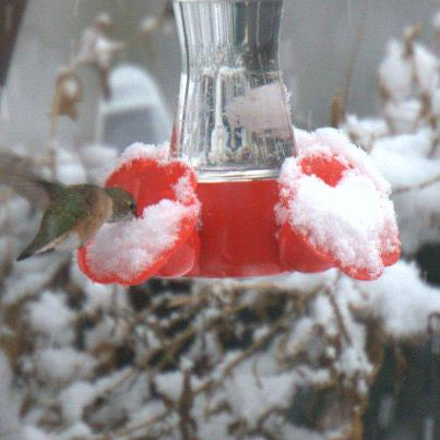 hummingbird feeders even in the snow!