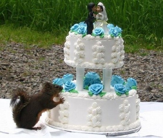 Thinks wedding cake is one of those new squirrel feeders!